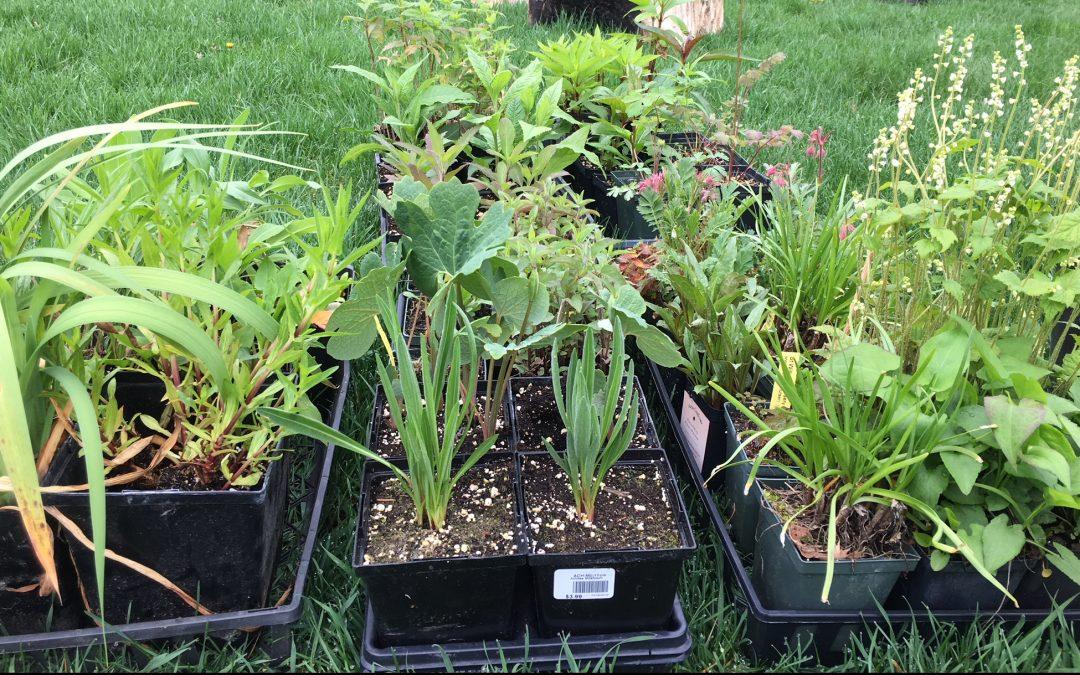 National Pollinator Week – My backyard butterfly and bee gardening!